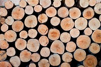 Background from the sawed pine firewood