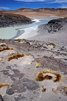 Salt Water River in Atacama Desert