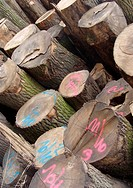 stacked log cut trees tagged with fluorescent spray_paint