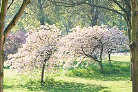 Field with blooming trees in spring