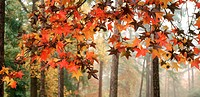 Scenic of fall leaves on a branch