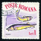 poststamp fish Beluga