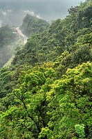 Green forest in mountain