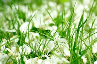 White flowers petals on the grass