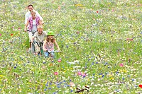 Family riding bicycles in wildflower field