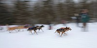 Blurred motion view of sled dogs race towards Campbell airstrip during the ceremonial start of the 2011 Iditarod sled dog race, Anchorage, Southcentra...