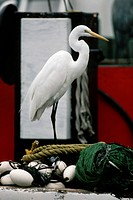 Egret on Fishing Boat