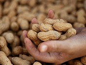 Hand Holding Peanuts at Farmer´s Market in Seattle Washington