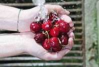 Italy, Tuscany, Magliano, Close up of woman's hand washing cherries under water