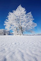Winter landscape with snow covered tree