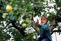 Boy picking fruit in tree