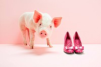 Piglet next to shoes in pink studio