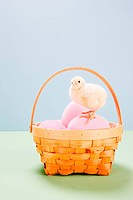 Chick standing on pink eggs in basket in studio