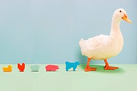 Duck walking by line of toy farmyard animals, studio shot