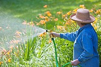 Senior woman watering garden of lilies