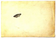 Small delicate moth on an old card