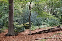 Autumn colors, Estate Spanderwoud, Hilversum, Goois Natuurreservaat, The Netherlands