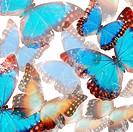 marble butterflies
