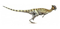 Stegoceras. This dinosaur lived in Canada and the USA during the Campanian stage of the late cretaceous period.