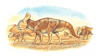 Protoceratops andrewsi. This dinosaur lived in China and Mongolia between the Santonian to Campanian stages of the late cretaceous period.