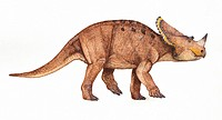 Brachyceratops montanaensis. This dinosaur lived in Montana, USA between the Campanian to Maastrichtian stages of the late cretaceous period.