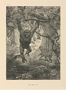 Primates, 19th century. This artwork is titled ´Who Comes Here´ It is from ´The Life and Habits of Wild Animals´ 1874, illustrated the German_British ...