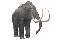 Artists reconstruction of a woolly mammoth Mammuthus primigenius an extinct relative of the elephant which lived during the Ice Age