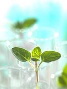Plant research, conceptual image.