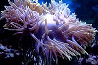 Coral in sea