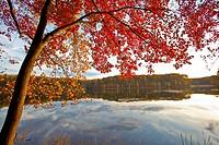 Fall color in Seneca Creek State Park