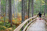 Pondicherry Wildlife Refuge - Mud Pond Trail in Jefferson, New Hampshire USA during the autumn months