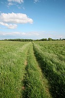 Track through a grass field at Youlgrave, Derbyshire
