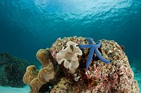 Sea Star and Coralhead Landscape