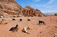 Goats sitting in front of the Monastery, sculpted out of the rock, at Petra, Jordan