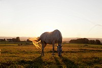Hose grazing in rural field