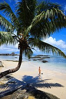 Beach with palm tree at Fisherman's Cove, Bel Ombre, Mahe Island, Seychelles