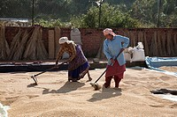 Mature women drying rice - Bhaktapur, Kathmandu Valley, Nepal