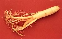 Panax ginseng _ medicinal plant _ root of the ginseng plant _ traditional medicine in asia _ Ginseng _ panax ginseng _ radice _ pianta medicinale