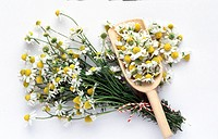 Tied together several chamomile branches with a red_white cord a wood spoon filled with chamomile blossoms against white background