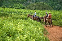 Family and Cuban guide on a horse ride tour in Vinales valley, Cuba