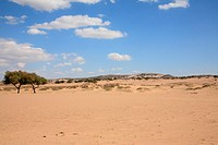 the desert scenery in Inner Mongolia