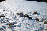 plants on snow slope