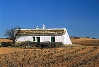 house in vineyard around El Toboso, Province of Toledo, autonomous community Castile-La Mancha, Spain, Europe