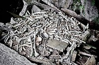 Wooden coffin full of bones
