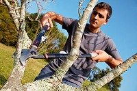 Farmer pruning fruit tree, Pruning secateur, hand tools for agriculture, Usurbil, Gipuzkoa, Basque Country, Spain