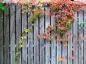 Autumn Wall