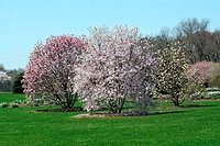 Trees blooming in a park