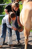 Girl cleaning hoof / riding instructor, hoofpick