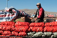 unloading onions at the market in Ulan Baatar, Mongolia