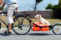 Stock photo of a dog being towed in a trailer from a bike